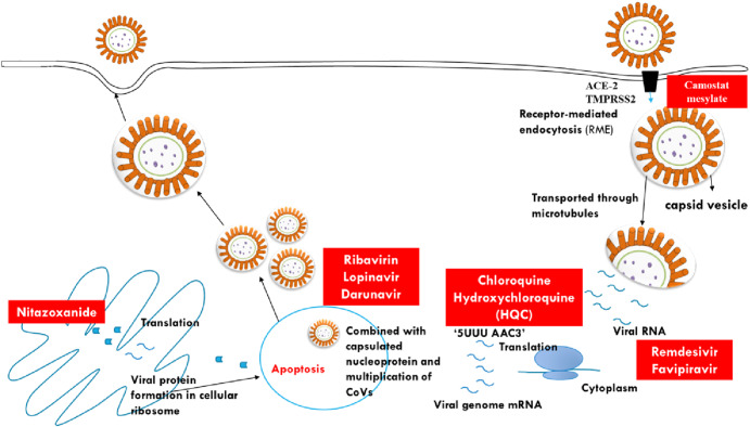 Full length article OUTBREAK of novel corona virus disease (COVID-19): Antecedence and aftermath